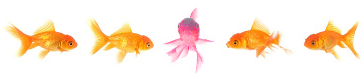 Fish in single line_pink2