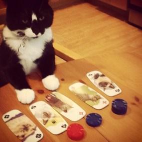TeddyBoy plays poker