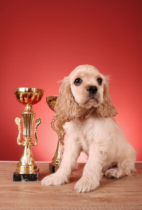 dog with prize
