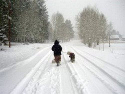 walking in the snow with an Old English Sheepdog, judythe morgan