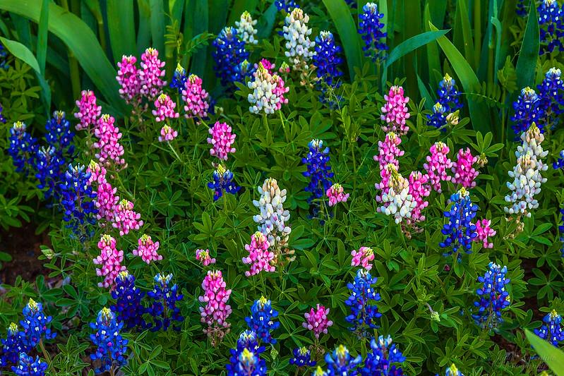 https://i2.wp.com/judyv.smugmug.com/Clark-Gardens/Clark-Gardens-2012/i-k2jRHwz/0/L/JVP_20120327_ClarkGardens5521-L.jpg