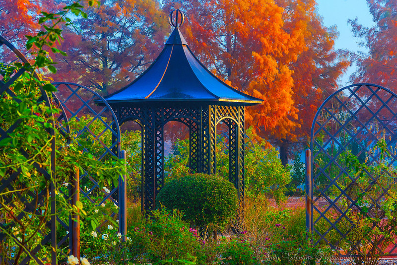 https://i2.wp.com/judyv.smugmug.com/Clark-Gardens/Fall-at-Clark-Gardens-2012/i-sPDsvmQ/0/L/JVP_20121120_ClarkGardens4107-L.jpg