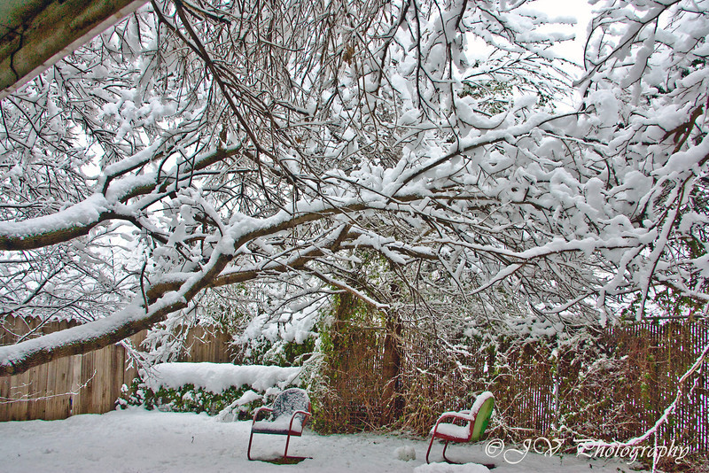 https://i2.wp.com/judyv.smugmug.com/Nature/Winter-in-Texas/i-qBNqpT5/0/L/JVP_20100211_1434-L.jpg