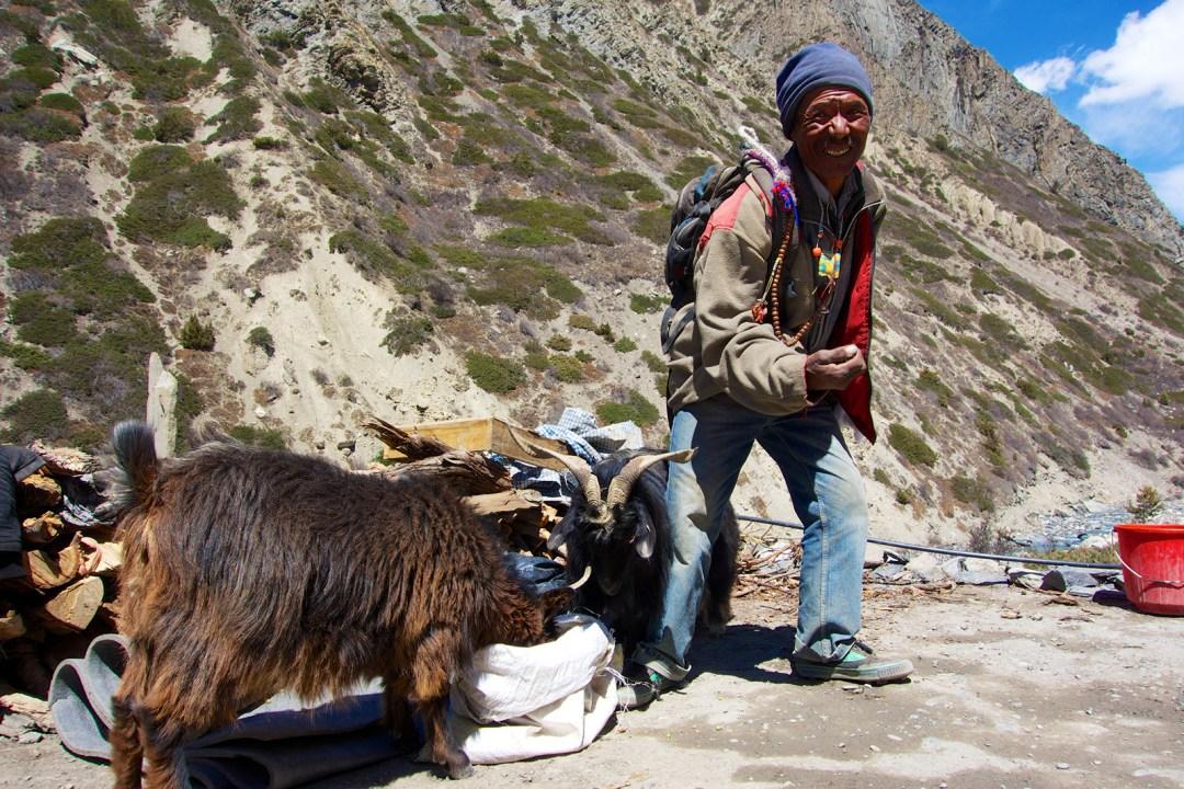 nepal-manang-shepherd