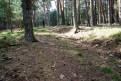 Entre los pinos