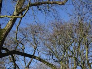 Blauwe winterlucht, Utrecht