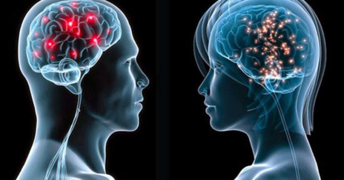Las diferencias entre los cerebros masculino y femenino
