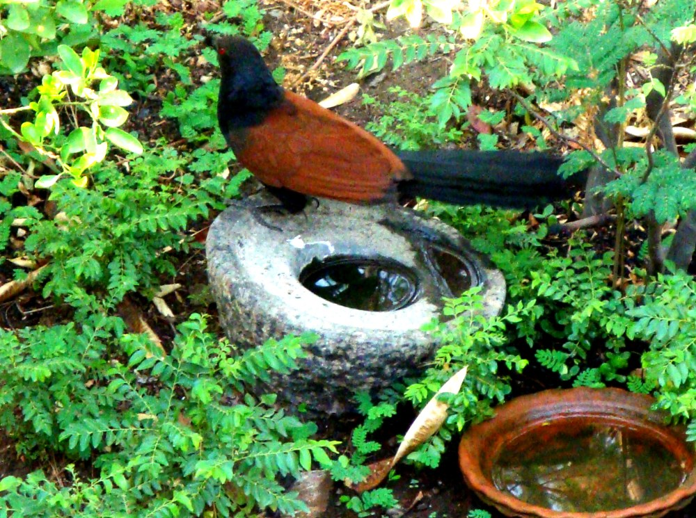 Look who is in my garden (3/4)
