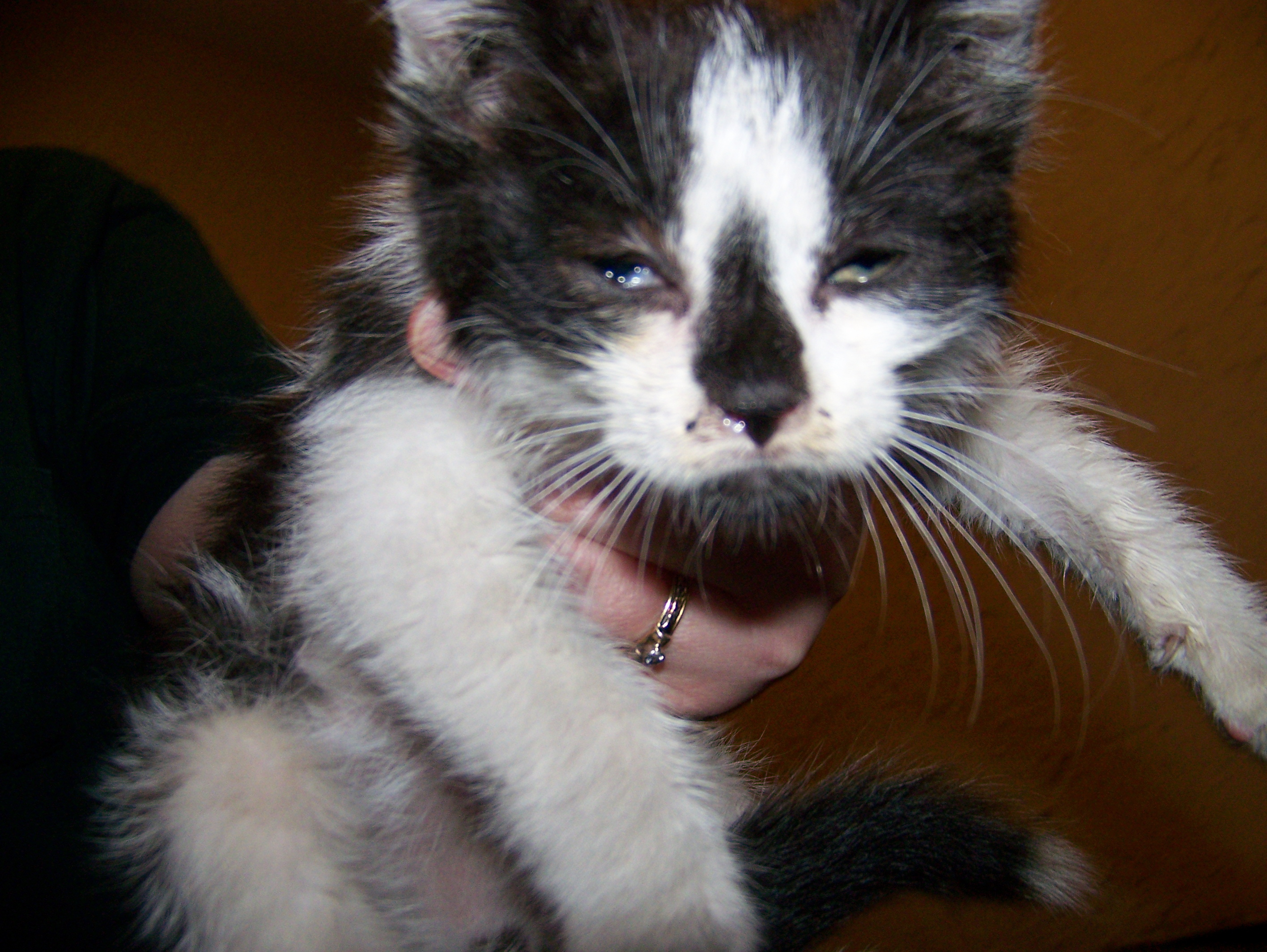 His name will probably be Boom, complementing the other cats, Thud and Splat.