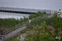 Oka park marshland path