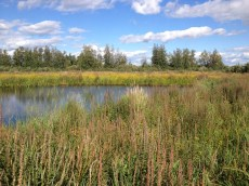 cooper marsh (2)