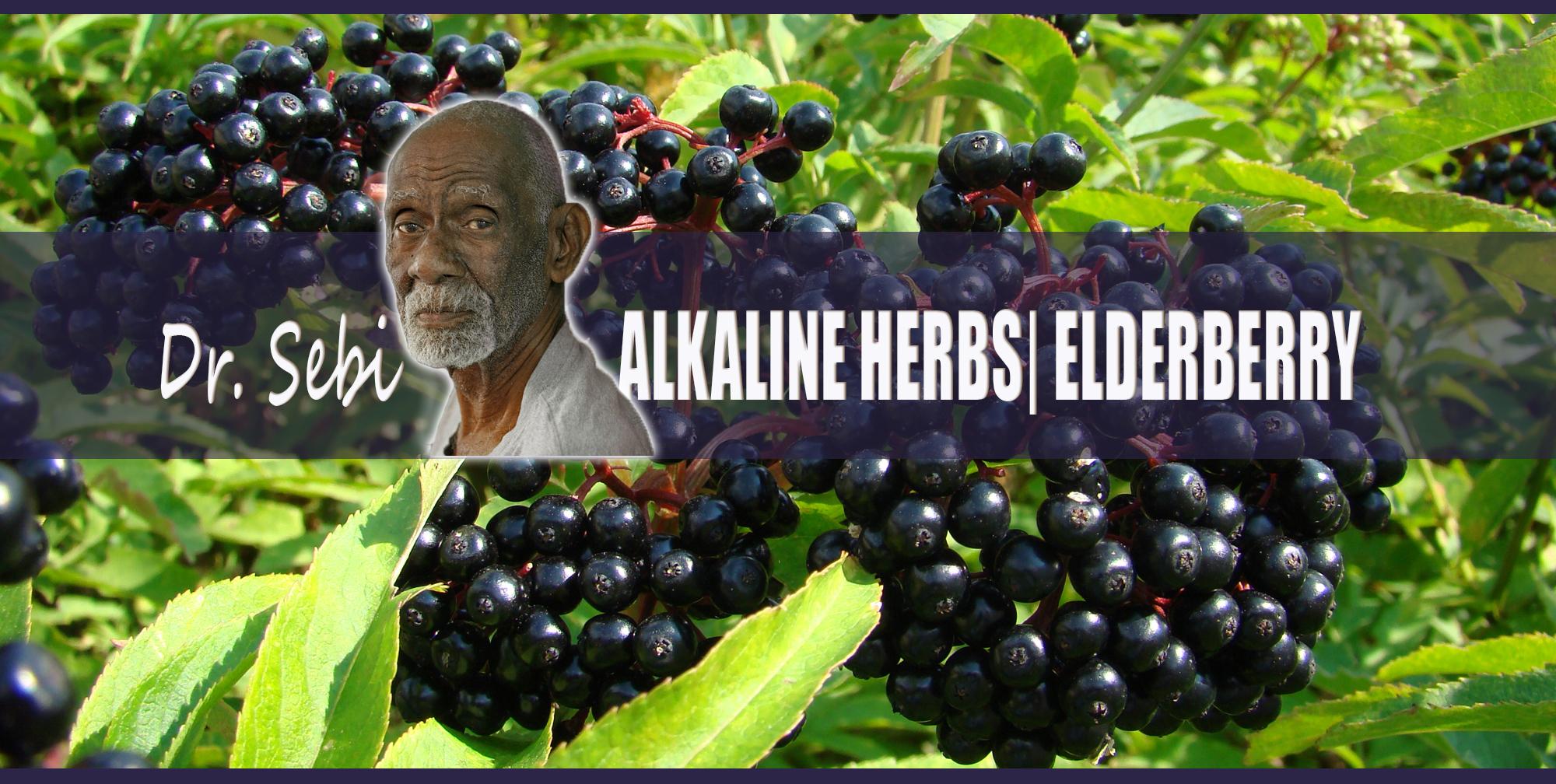 Dr Sebi's Alkaline Herbs: Elderberry