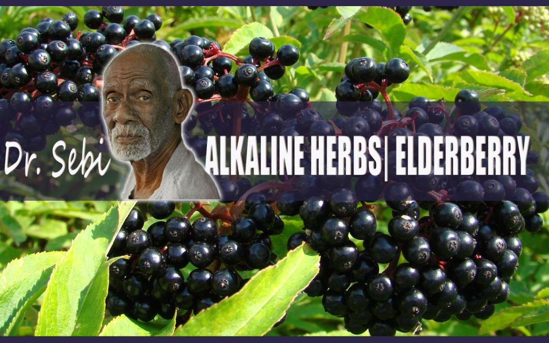 Dr Sebi's Alkaline Herbs: Elderberry | JUICE HUGGER'S A HEALTHY CRUSH