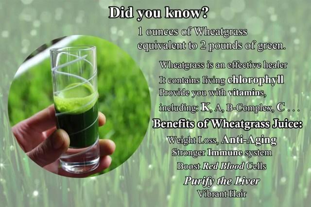 Wheatgrass Benefits, Best Juicer for Wheatgrass, Juicer Portal