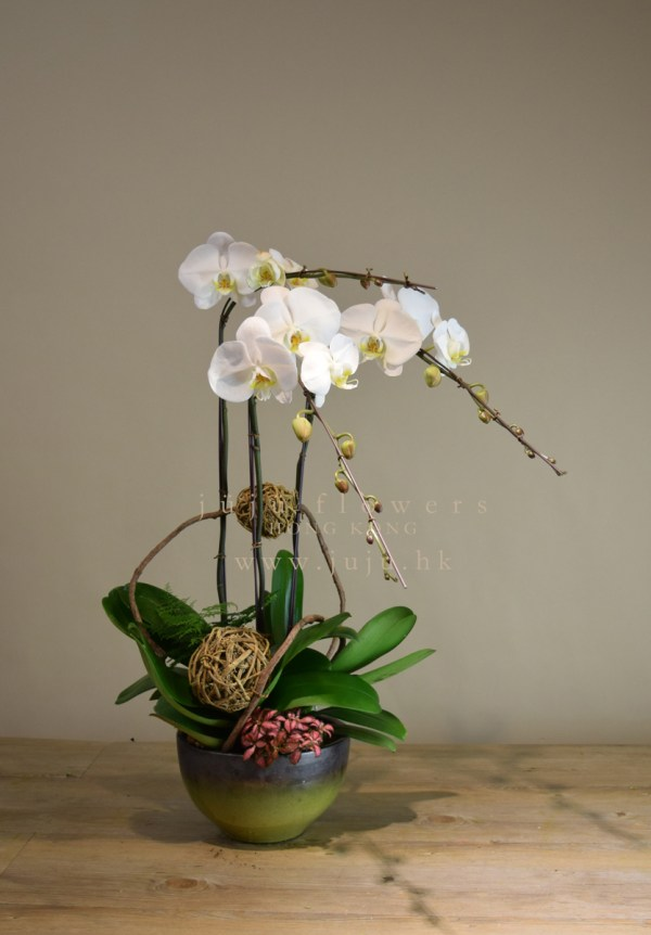 05005-3 stems white orchid