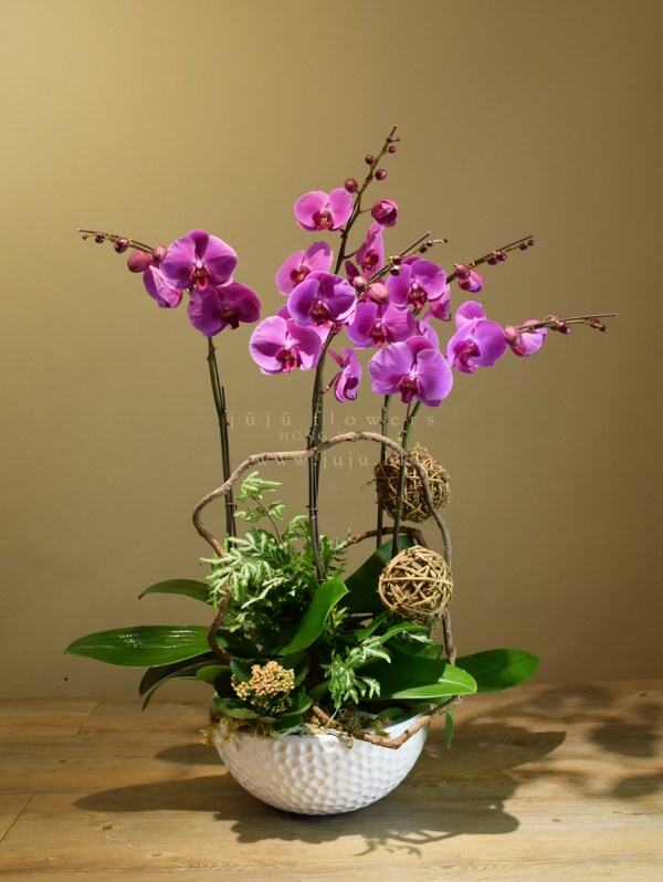 05005 Moth Orchids, 5 stems