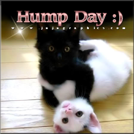 Hump Day 1 Graphics Quotes Comments Images Amp Greetings For Myspace Facebook Twitter