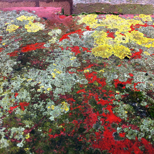 picture of vibrantly coloured lichen and peeling paint