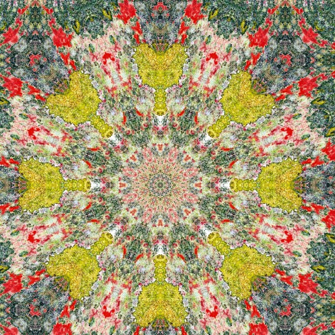 Kaleidomatic repeat of lichen photo.