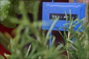 Basilikum, Blumenampel selber machen, Blumenleiter, Blumentopaufhängung, DIY Leiter, Gartengestaltung, Gartenkräuter, Kräuterarrangement, Leiter im Garten, Majoran, Minze, Rosmarin, Salbei, Thymian, Zitronenmelisse