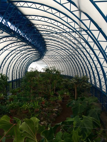 Overview of the orchid's beautiful greenhouse, inspired by the European greenhouses from early 20th century