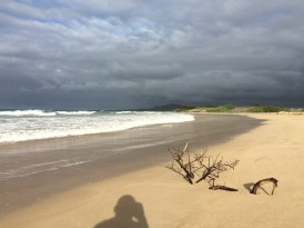 How often do you get a beach all for yourself? This one is a mere 500 meters from the centre of Puerto Villlamil, in Isabela