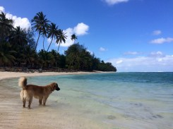 The island's dogs seem more interested in the fish than in the wild chickens