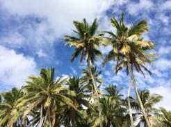 Ah, winter in the tropics!
