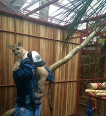 It's not easy to clean a cage when there's a baby puma on your back!