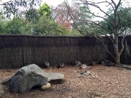 Life's hard if you are a kangaroo...