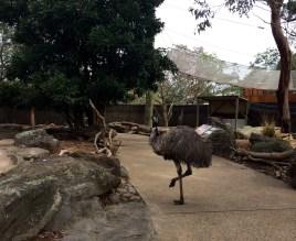 An Ema pulling a flamingo