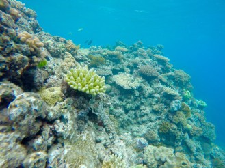 Swimming close to the reef is an incredible experience
