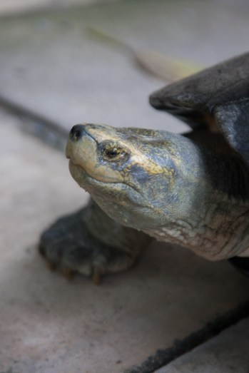 João snapped this great photo of the turtle