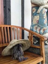 Kivas, our well travelled nephew's stuffed Kiwi bird, also liked the farmer's hat