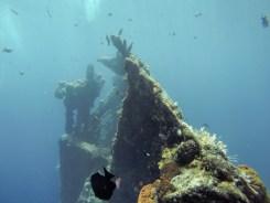 Wrecks attract amazing wildlife