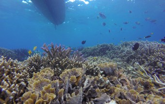 ... and colorful reefs