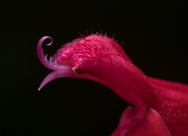 A small winter flower (reversed 28mm @ 1.2x magnification, diffused flash, f16, 1/125s, ISO 200)