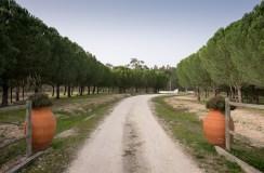 Coruche, Portugal (16mm, f5.6, 1/350s, ISO 200)