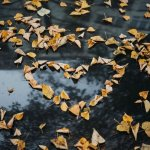 Leaves, floating in water, form heart