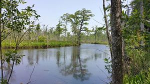Lockwood Folly Wetland