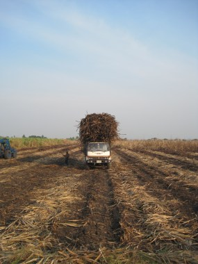 A large work truck piles sugar-cane high atop the truck bed in Singburi, Thailand