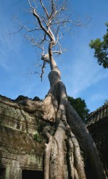 Ta Phrom Temple, also known as Tomb Raider Temple Where the Movie Was Filmed