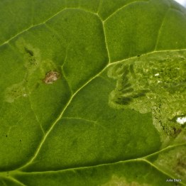 fly larvae in mine