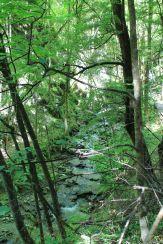 Beautiful stream in Arrowtown