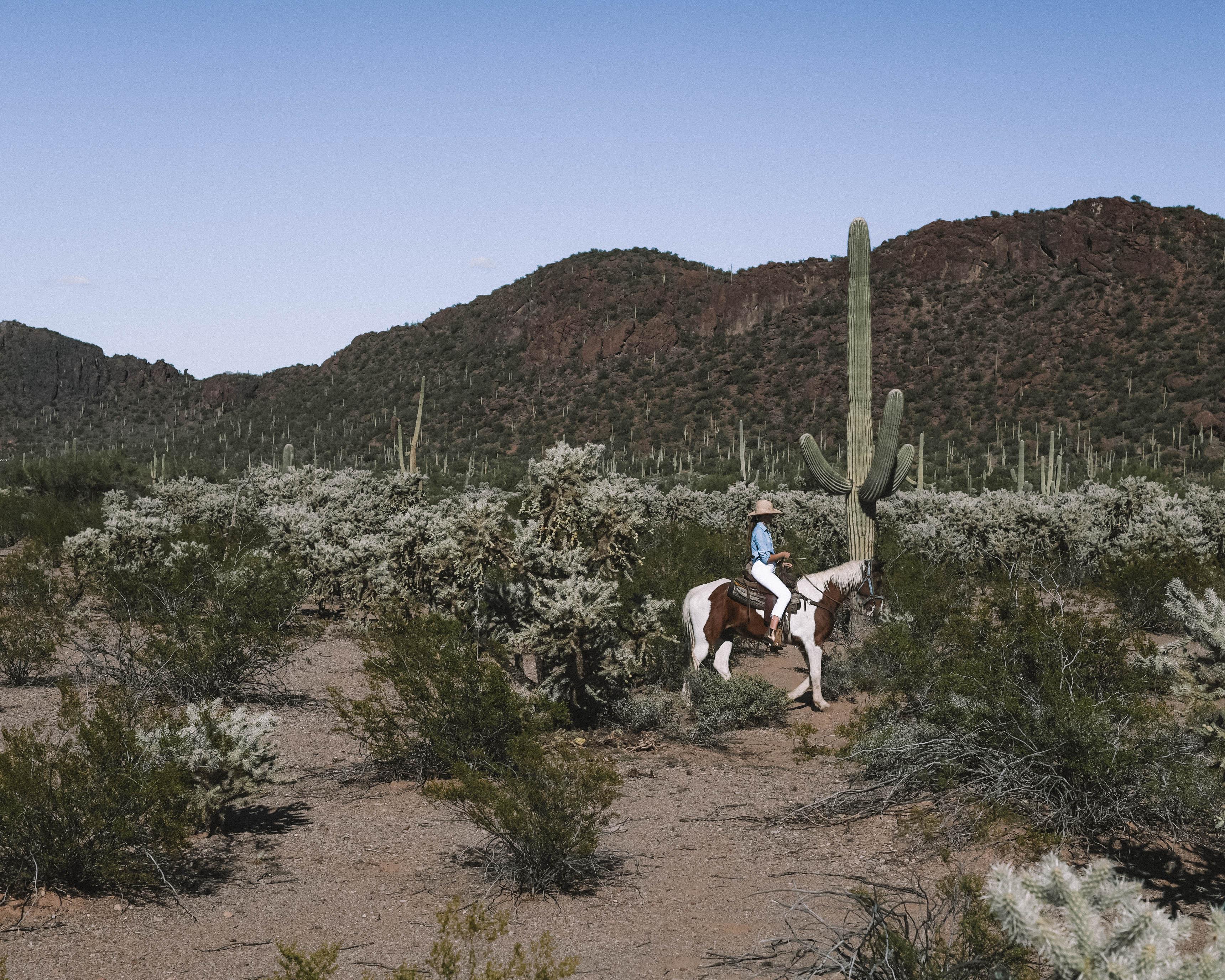 horse riding in Tucson