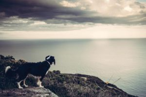 dog_staring_at_sea_juliana_scodeler_pet_photography