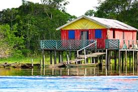 Amazonia 14