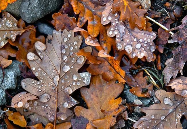 As cores de outono