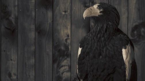 The-Eagle-02b