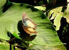 Am unteren Wli-Fall findet man tausende Schmetterlinge